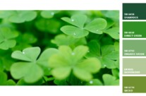 The Colors of St. Patrick's Day